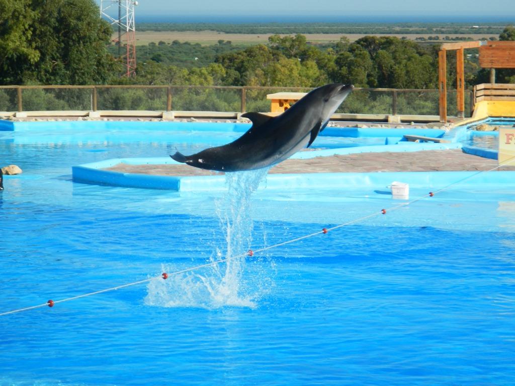 pokaz delfinów