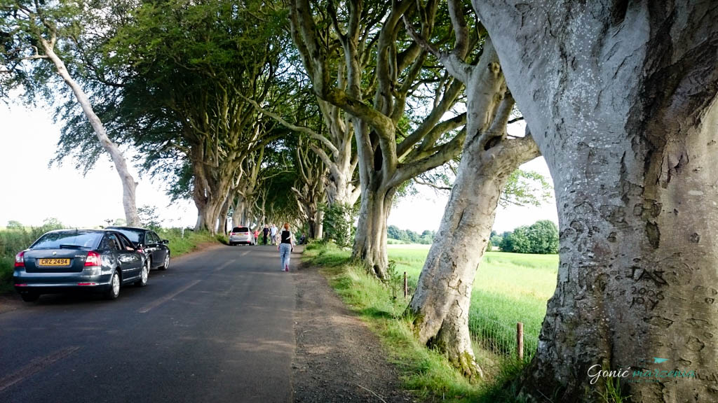 The Dark Hedges Gonić Marzenia
